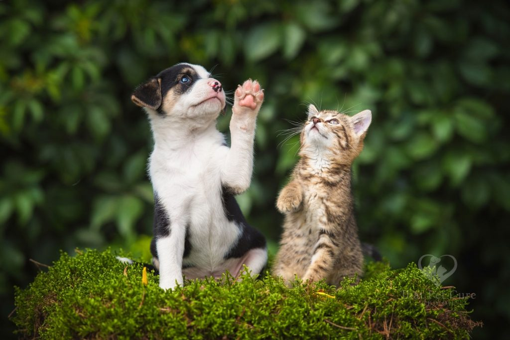 CBD oil near me for cats & dogs