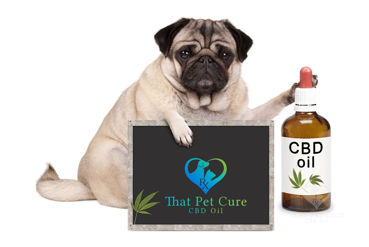CBD oil for dogs near me
