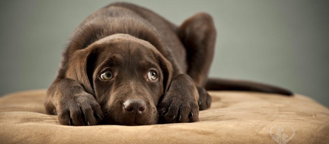 Buy CBD oil for dogs