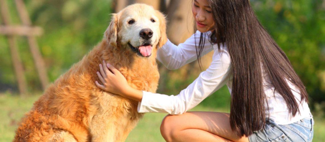 Buy Dogs CBD oil in NY