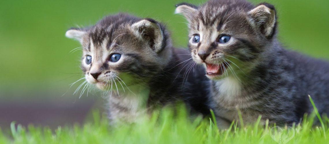 Buy CBD oil for your cat