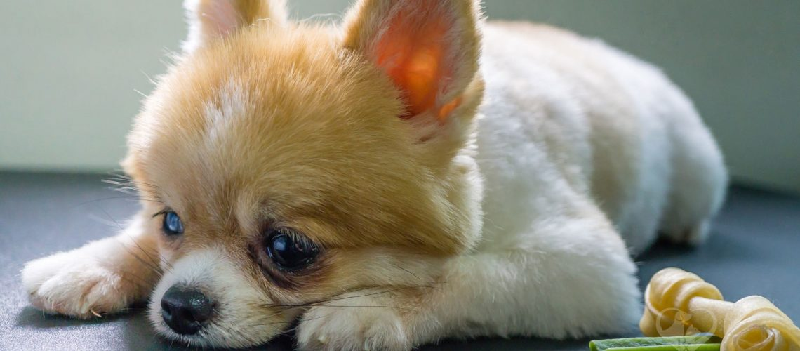 Buy CBD oil for dogs near me