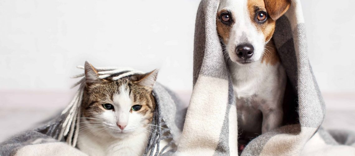 that-pet-cure-holistic approach-to-your-furryfriends-health